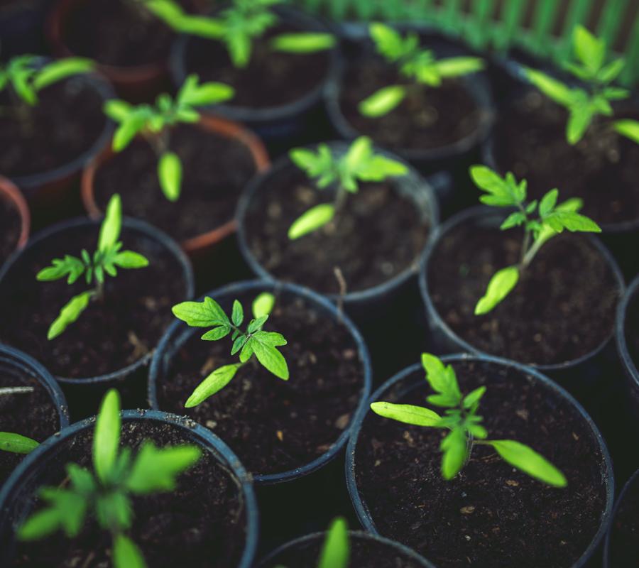 SIPOL Polimeri Biodegradabili